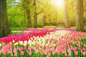 the world u0027s most beautiful gardens