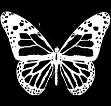 isolated butterfly of bright color on a white background stock