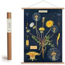 botanical wrapping paper dandelion chart wrapping paper poster present indicative