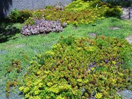 ground cover plants for southern california