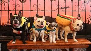 Pet Halloween Costumes This Year U0027s Top Pet Halloween Costume Trends