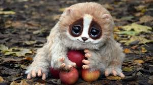 48 cute animals pictures hd download cute animals
