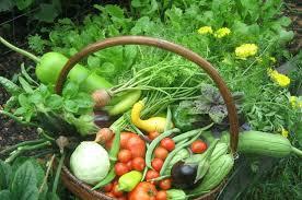 gardening fruit and vegetable gardening extend the harvest