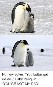 Funny Penguin Memes - funny penguin meme