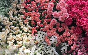 Flowers For Valentines Day The Definitive List Of Where To Get Your Flowers For Valentine U0027s
