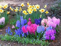 small flower bed ideas home flower garden designs zhis me