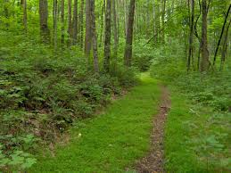 Tennessee forest images File standing stone state forest tn1 jpg wikimedia commons jpg