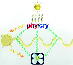 photoreceptors and regulation of flowering time plant physiology