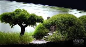 Japanese Aquascape by 10 Water Lettuce Pistia Stratiotes Dwarf Mini Live Aquarium