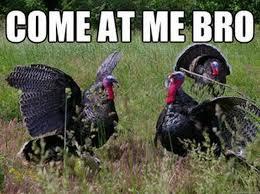 Thanksgiving Turkey Meme - thanksgiving turkey meme 28 images funny turkey meme