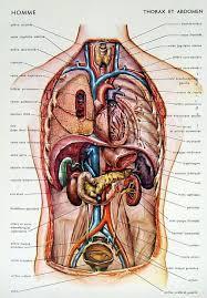 Anatomy Human Abdomen Human Body Abdomen Map Human Anatomy Body