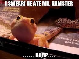 reptile memes