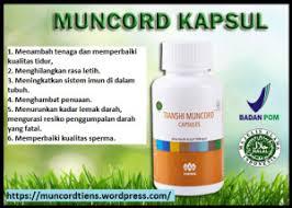 jual obat kuat herbal alami dan tahan lama untuk pria beli paket