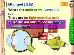 Blind Spot Left Eye Limitations Of Our Eyes 11 3 Limitations Of Our Eyes Ppt Download