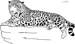 jaguar coloring pages jaguar coloring pages archives best coloring