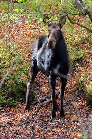 New Hampshire wildlife tours images 343 best home front images granite state new jpg