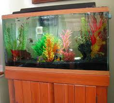 don u0027t tank it u2014 tips for tropical fish lovers thanks for all the