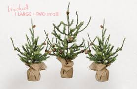 thank you vintage colorado pine trees set of 3