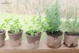 Herb Container Garden - herb container garden farmhouse 40
