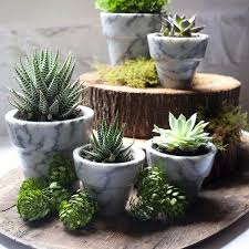 47 best planters images on pinterest landscaping plants and
