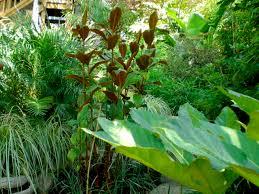 Small Tropical Garden Ideas Interior Ideas Tropical Garden Design Photos