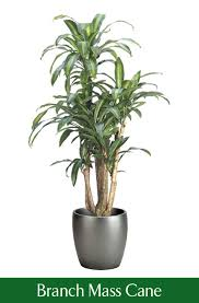 astounding ideas low light office plants best plants for the