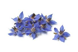 edible blue flowers recipe for edible flowers design build pros
