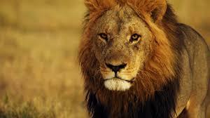 savage kingdom nat geo wild