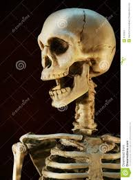 halloween skeleton stock images image 3155054