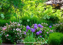 image of spring flowers spring flowers in boston garden tours boston discovery guide