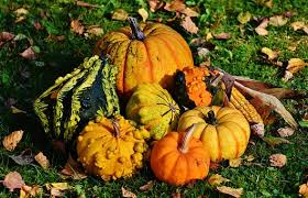 thanksgiving images pixabay free pictures