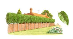 backyards winsome trees for backyard privacy backyard ideas
