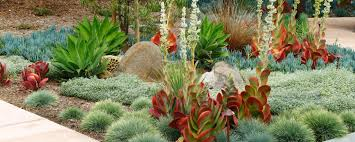 Drought Tolerant Landscaping Ideas Landscaping San Diego Design Home Ideas Pictures Homecolors