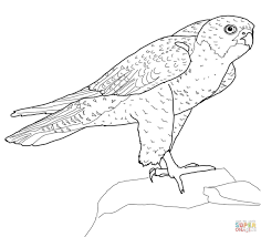 100 printable penguin coloring pages unbelievable gentoo