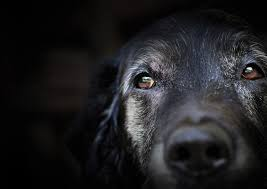 grieving the loss of a dog losing a beloved animal the grieving process