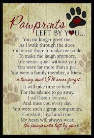 loss of pet losing a dog quotes gorgeous best 25 pet loss quotes ideas on