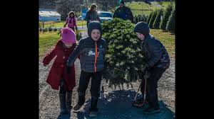 o christmas tree farm gets busy u0027earlier and earlier every year