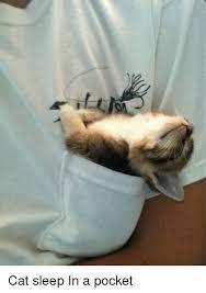 Sleeping Cat Meme - cat sleep in a pocket cats meme on me me
