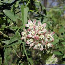 arizona native plants list natural treasure select native plants and their uses