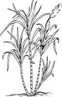sugar cane clipart i2clipart royalty free public domain clipart