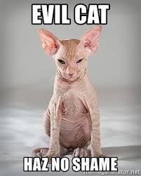 Grumpy Cat Meme Generator - evil cat meme generator mne vse pohuj