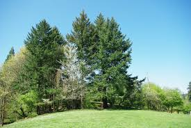 file hillsdale park trees portland oregon jpg wikimedia commons