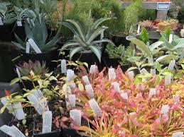 portland native plant list chickadee gardens plant shopping at xera