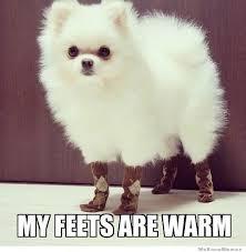 Meme Socks - bella needs socks elyse would love this pinterest socks