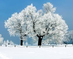 photo collection 1280x1024 beautiful white tree