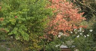 there is a tree for every kind of garden