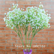 bulk baby s breath buy baby breath seed and get free shipping on aliexpress