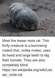 Moles Blind 25 Best Memes About Moles Moles Memes