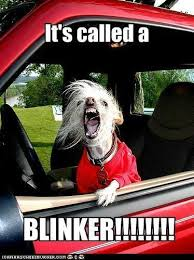 Dog Driving Meme - drives me crazy when someone cuts in front me lol pinterest