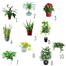 Best Plant For Office Desk Small Office Plant Best Desk Plant Ideas On Grow Room Design Plant